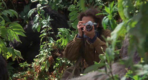 Colecci n e historia de las c maras for Gorilas en la niebla